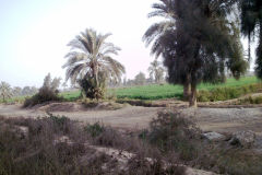 Landscape at the edge of the railway line between Al Faiyum and Al Wasta in Egypt.