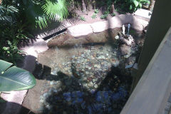 Turtles inside Gaylord Palms, Orlando, Florida, USA
