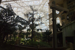Glas house structure inside Gaylord Palms, Orlando, Florida, USA