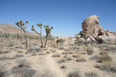 Landscape in Joshua Tree National Park, California, USA