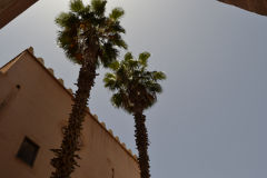 Palms in Marrakech, Morocco