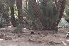 Desert landscape east of Tafraoute in the Anti Atlas, Morocco