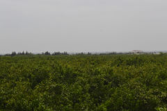 Landscape between Tafraoute and Ouarzazte, Morocco