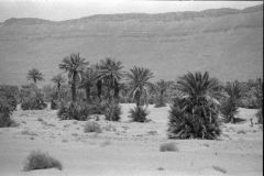 Palms in the Draa Valley, Morocco