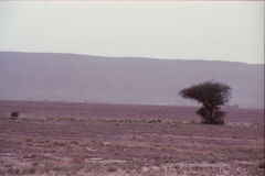 Desert landscape between Zagora and Mhamid, Morocco