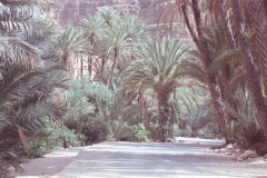 Oasis east of Tafraoute in the Anti Atlas, Morocco