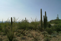 Landscape in Saguaro National Park Arizona, USA