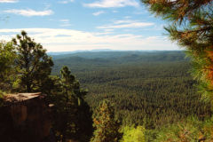 Landscape in Tonto National Forest, Arizona, USA