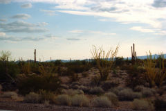 Landscape in the Sonora Desert near Mexico in Arizona, USA
