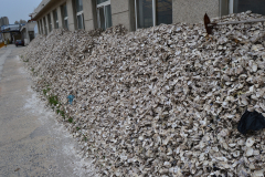 Mussel shells somewhere at the ocean in Dalian, China