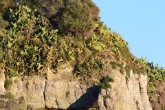 First day of 2017 in Aci Trezza (Riviera Dei Ciclopi) in Sicily, Italy