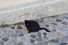 A cat on Lipari Island, one of the Aeolian Islands in the Tyrrhenian Sea, Italy