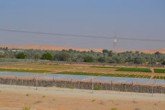 Landscape in the Rub al-Chali at the Oasis Liwa in the United Arab Emirates
