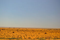 Termite nests near Coral Bay, Western Australia