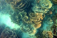 Underwater impressions of Coral Bay, Western Australia