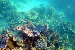 Underwater impressions of Coral Bay, Western Australia