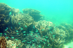 Underwater image of the corals in Coral Bay, Western Australia