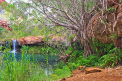 Fern Pool in the Dale Gorge in the Karijini National Park, Western Australia