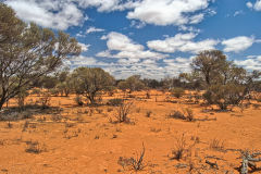 Landscape near Mount Magnet in the Outback of Western Australia