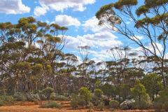 Landscape near Kalgoorlie in Western Australia