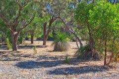 Bush landscape near Perth in Western Australia