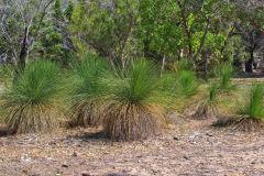 Bush landscape near Perth in Western Australia