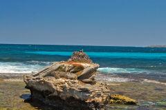 Eastern Osprey Nest at Rottnest Island, Western Australia