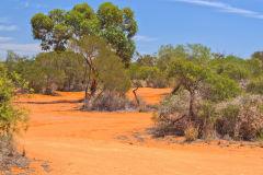 Landscape around Shark Bay in Western Australia
