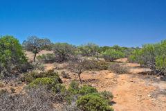 Landscape at Hamelin Pool at Shark Bay in Western Australia