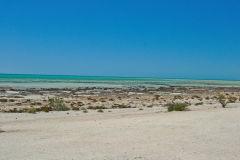 Beach of Hamelin Pool at Shark Bay in Western Australia