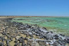Stromatolites at Hamelin Pool at Shark Bay in Western Australia