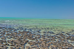 Stromatolites at Hamelin Pool at Shark Bay in Western Australia