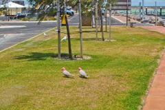 Denham at the Shark Bay, Western Australia