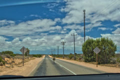 Emu on the road near Denham at the Shark Bay, Western Australia