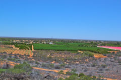 The fields of Carnarvon, Western Australia