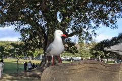 A seagull at Watsons Bay at South Head, Sydney, Australia