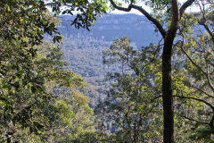Scenery on a hike in the Blue Mountains, Australia