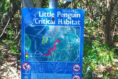 Little Penguin Critical Habitat at Collins Flat Beach in Sydney, Australia