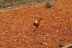 An unknown bird at the Featherdale Wildlife Park in Blacktown near Sydney, Australia