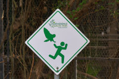 Danger! Birds attacking people. Fear everything!