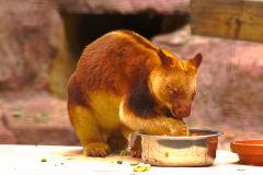 An unknown animal at the Featherdale Wildlife Park in Blacktown near Sydney, Australia