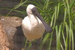 A unknown bird at the Featherdale Wildlife Park in Blacktown near Sydney, Australia