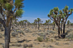 Landscape in the Joshua Tree National Park, California, USA
