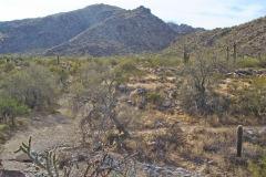 Landscape in the White Tank Mountain Regional Park near Phoenix, Arizona, USA