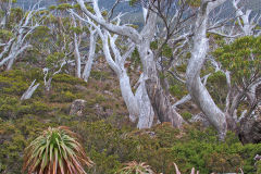 Landscape near Rodway Range in Mount Field National Park Tasmania