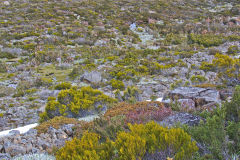 Landscape on Rodway Range in Mount Field National Park Tasmania