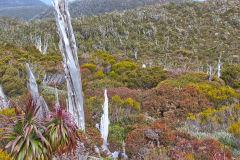 Landscape on Roadway Range in Mount Field National Park Tasmania