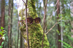 Moss beard is watching you in Mount Field National Park Tasmania