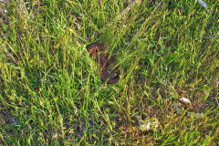 A snake at Heimat Chalets New Norfolk in Tasmania