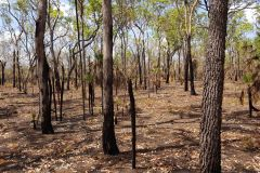 Burned landscape in Litchfield National Park Australia 2019